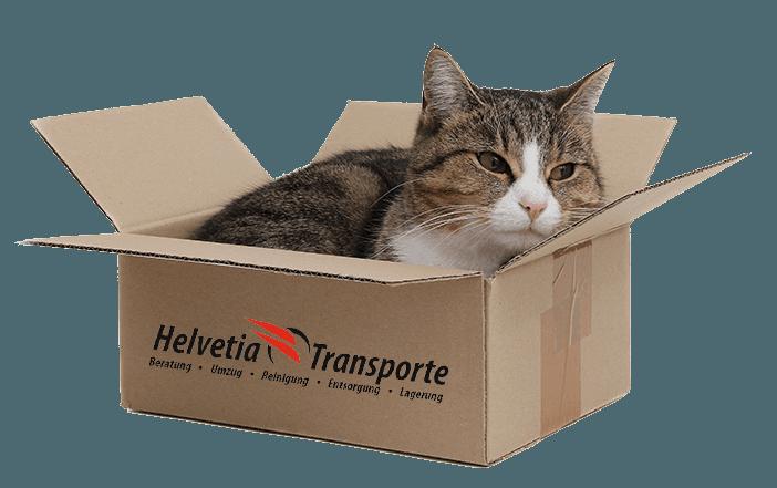 Helvetia Transport Katze im Karton